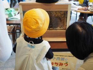 ミツバチに見入る幼児